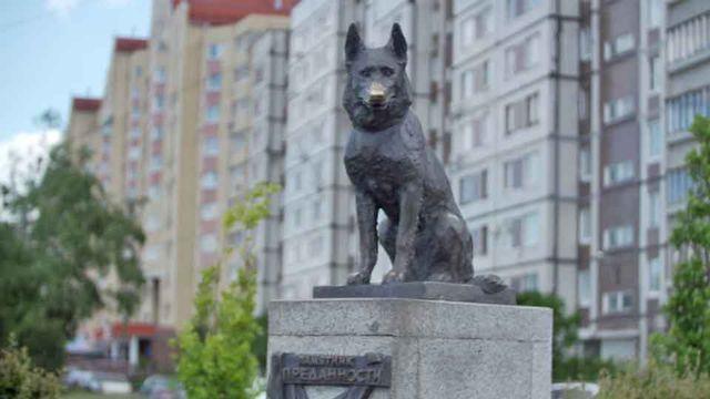 A história de pastor alemão que comoveu toda Rússia